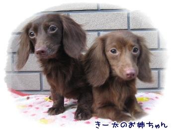 hanabi-akubi1_20130225140458.jpg