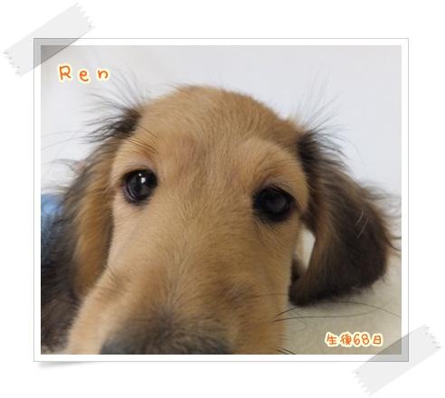 ren1_20130721085341.jpg