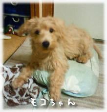 モコちゃん3ヶ月