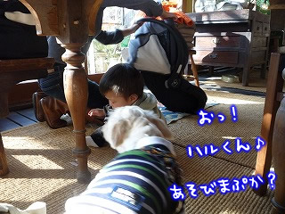 ボリジ/那須高原/栃木県