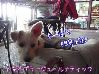 トキオプラージュ・ルナティック/二子玉川/東京