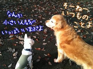 リリーちゃんとお散歩