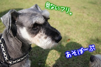 デジイチ☆ルンルン♪談合坂P