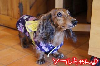 モクゼソール☆夏休みラストブッフェ☆お食事