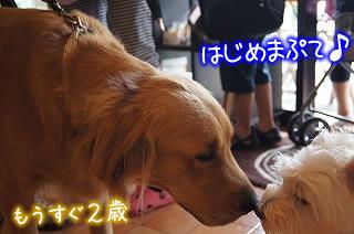 モクゼソール☆夏休みラストブッフェ☆ワンコ編