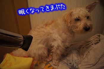 ぷーちゃんシャンプー