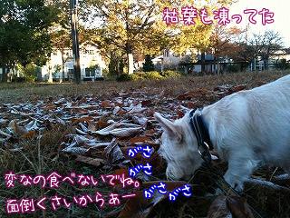 枯葉も凍った