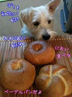 自家製ベーグルパン