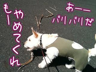 お散歩中の枝