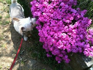 お花とぷー。