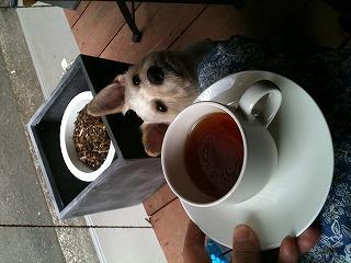 カネ保水産  紅茶