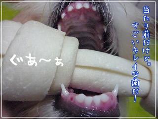 歯の状態 4ヶ月と13日歳