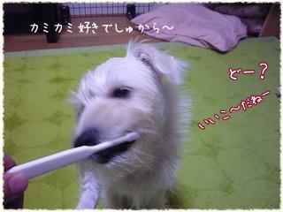 初めての歯磨き