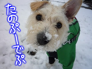 生まれて初めての雪