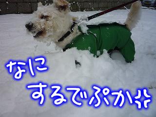 今日も雪お散歩だぷ♪