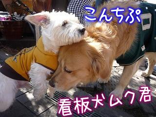 川越ベーカリー楽楽 看板犬