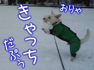 雪だ~!積もった~!