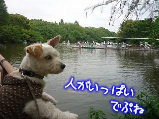 吉祥寺~井の頭公園