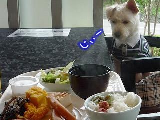 わんわんパラダイスの朝ご飯
