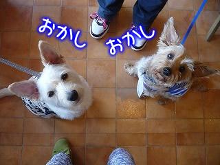 同じ犬種★そらくん★