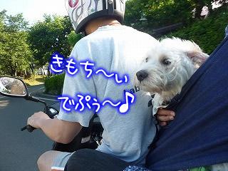 一緒にバイク