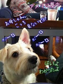 dappleback cafe/神奈川県/はるひ野駅 2回目