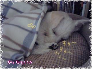 ぷー寝てる