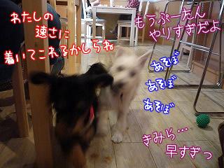 ぼくのしっぽ/池上線/東京