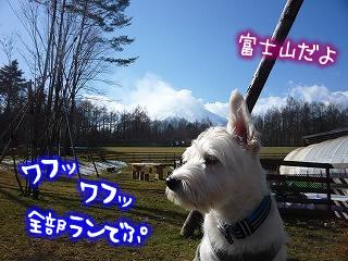 ドッグリゾート Woof