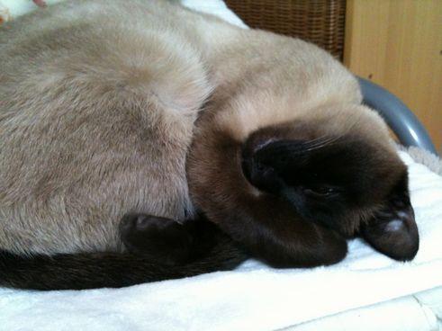 人の枕で寝るアジュw