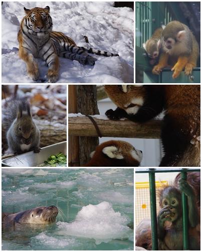 110221円山動物園