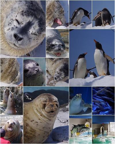 0430おたる水族館