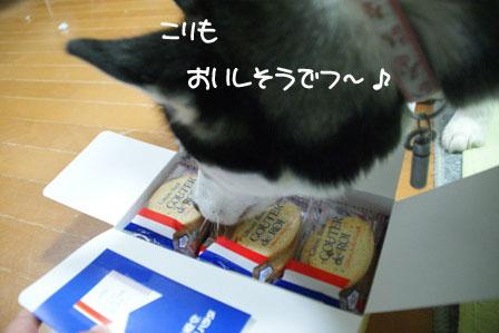 10_20100325213228.jpg