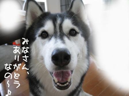 10_20101011203518.jpg