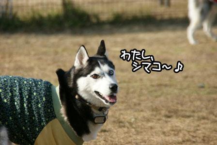 10_20110110205808.jpg