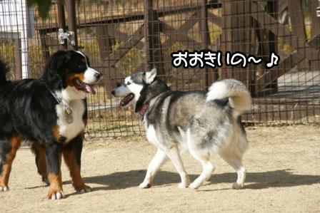 10_20110125185249.jpg