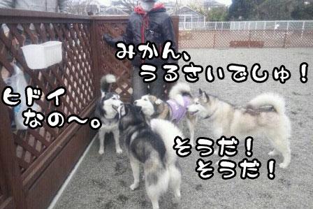 10_20110327200557.jpg