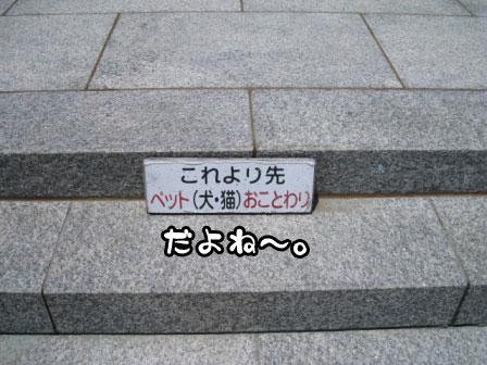 10_20110625215358.jpg