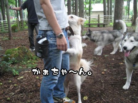 10_20110802210334.jpg