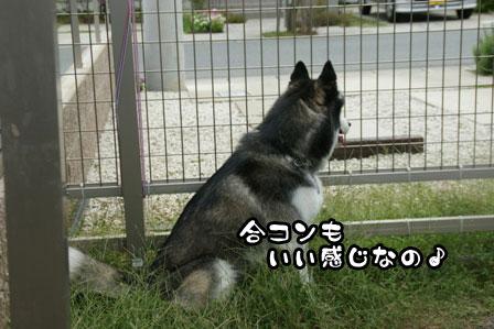 10_20110930203014.jpg