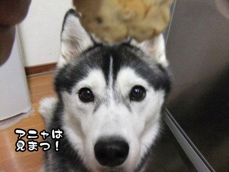 10_20111006205823.jpg