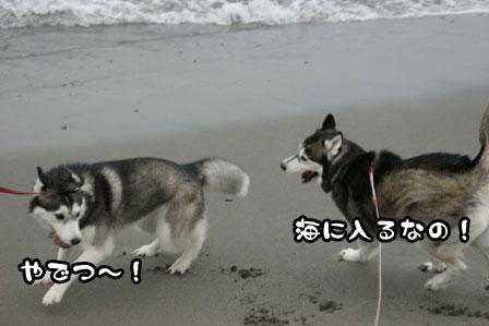 10_20111030220214.jpg