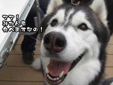 10_20111103215540.jpg