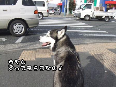 10_20111127203923.jpg