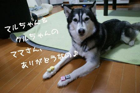 11_20100307215038.jpg