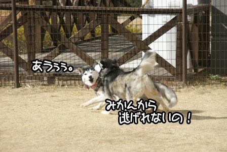11_20110201193223.jpg