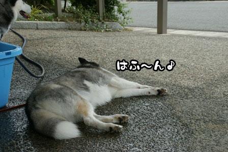 11_20110704210841.jpg