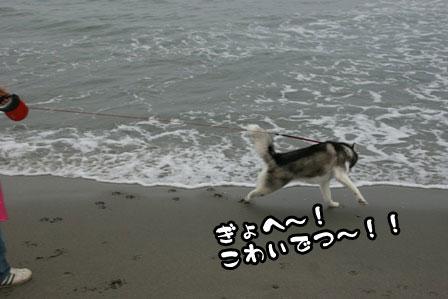 11_20111030220237.jpg