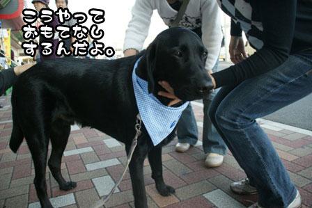 11_20111118213759.jpg