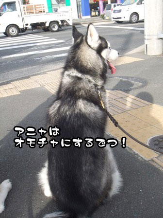 11_20111127203929.jpg